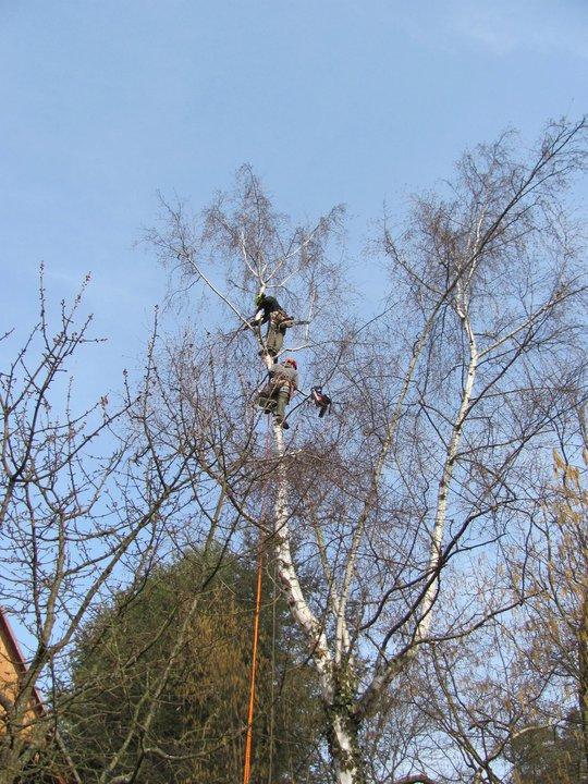 Arboristické práce - stromolezectví