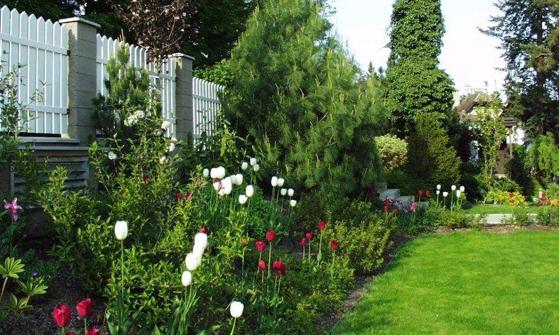 jarní efekt s cbulovinami v zahradě u rodinné vily v Černošicích