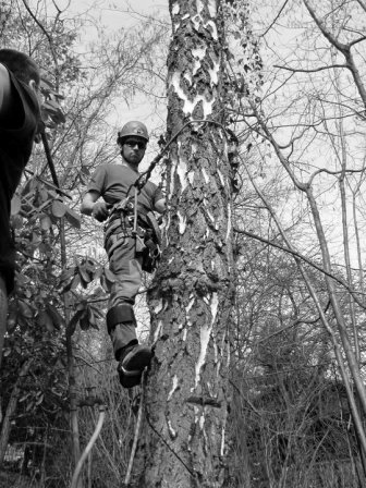 Arboristika a stromolezectví