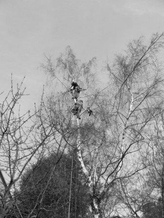 Arboristické práce a stromolezectví