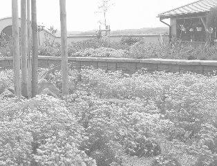 rodinná zahrada v Trnové